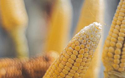 25% increase in grain sales volume in FY2020